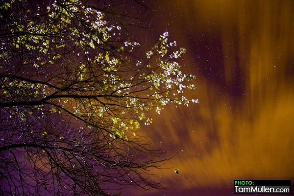 Trees Lough Neagh