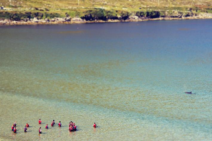 Dolphin Doogort Beach Achill Mayo